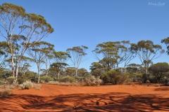 Western Australia - 0718