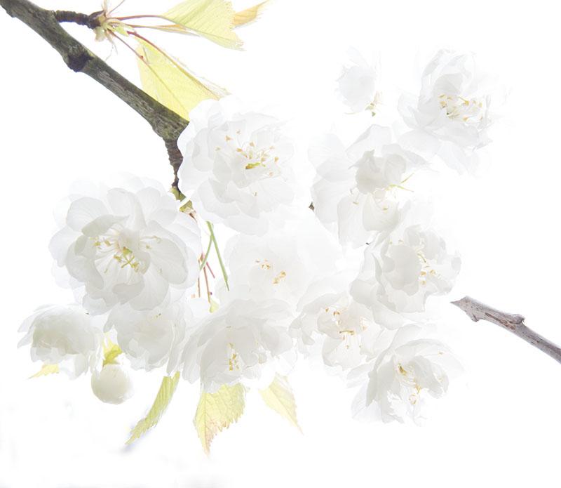 Paris-BloomingFlora-6216