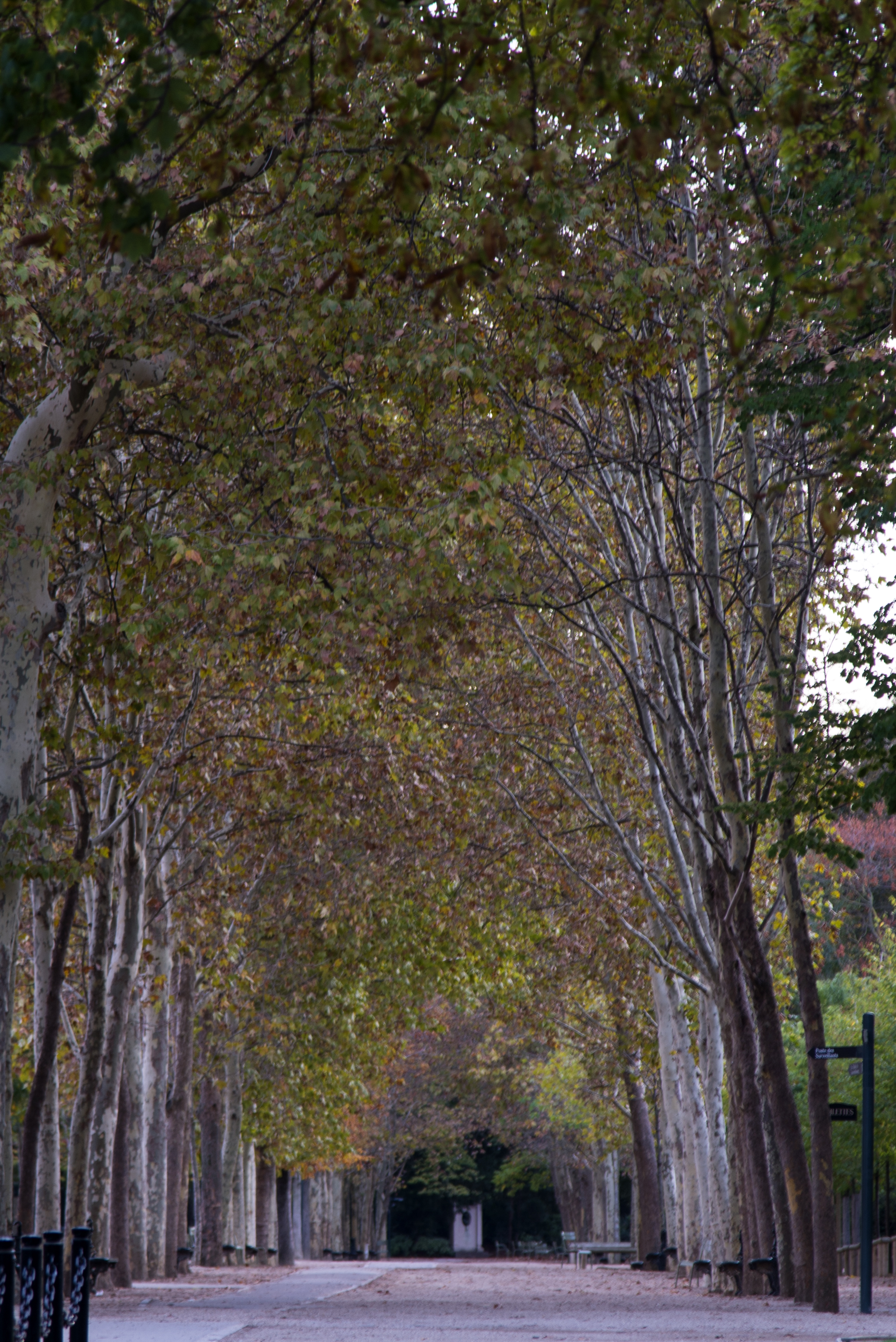 Autumnal Alleys - Paris - 3283
