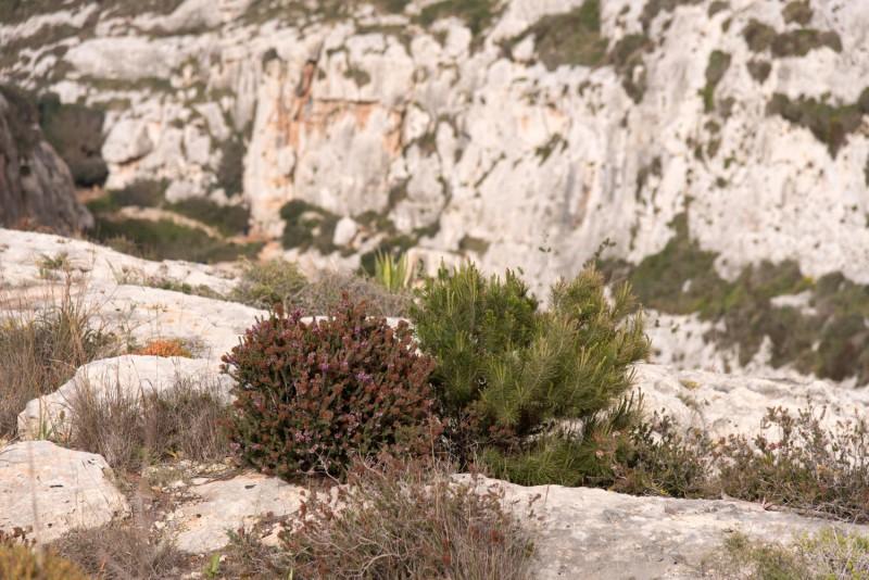 Malta - 7343