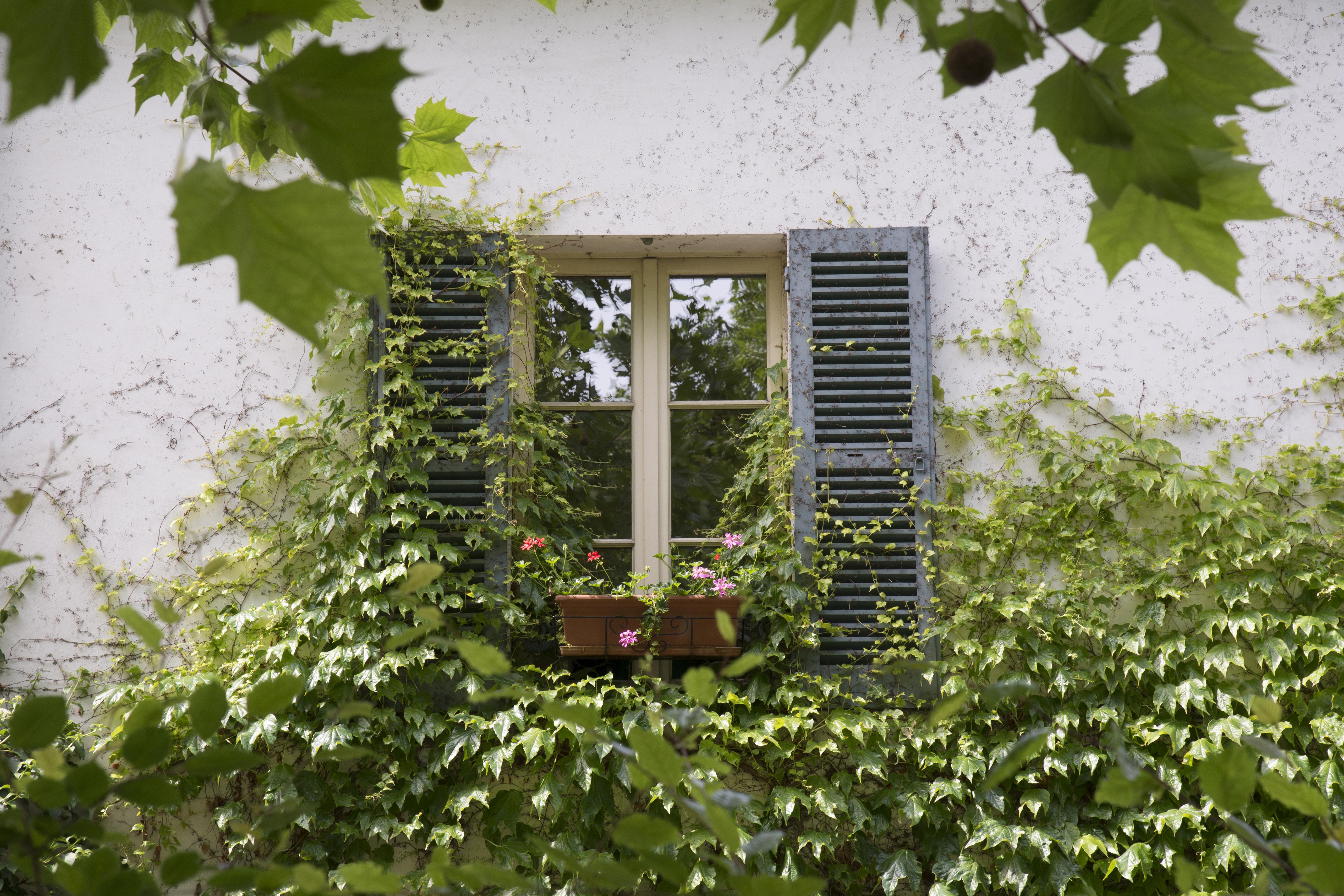 Paris Window - 8640