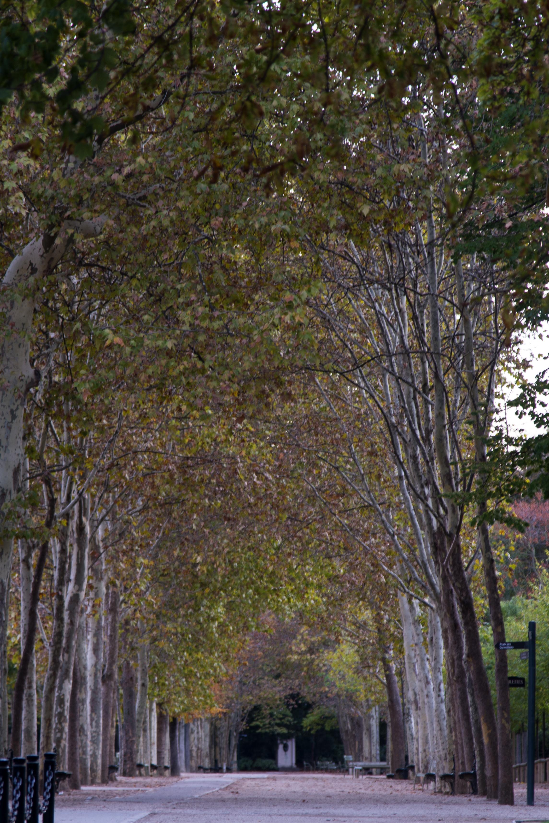 Autumn Alleys - 3283