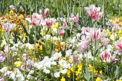 Colours of Spring - Paris - 0055
